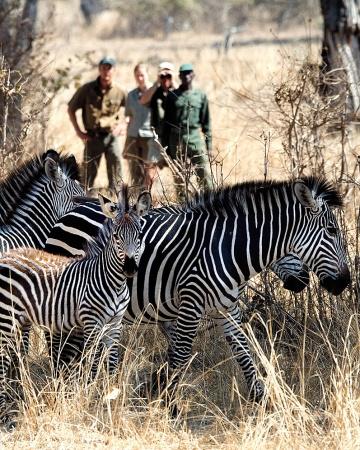 honeymoons-safari-ms107785_vert